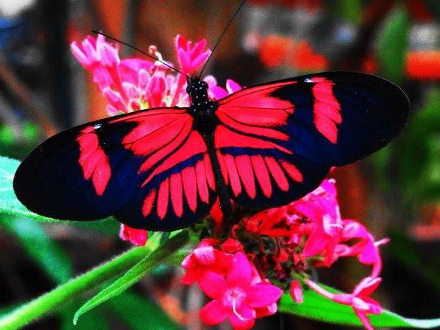 ecuador_butterfly
